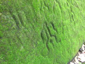 Petroglyph Nuku Hiva The Adventure Travelers scaled
