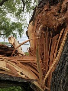 Broken Trees The Adventure Travelers