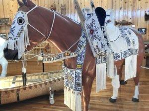 Horse The Adventure Travelers