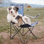 Dog chiling out in chair