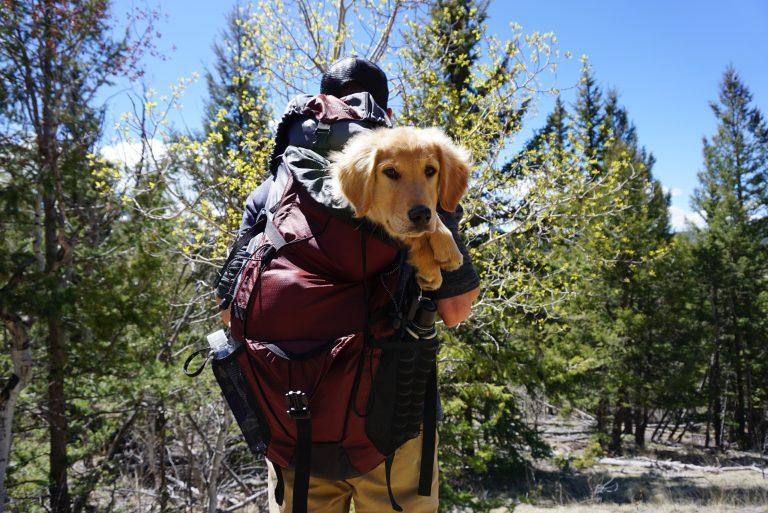 Hiking Dog in Backpack